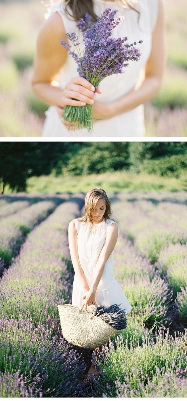 lavendershoot1