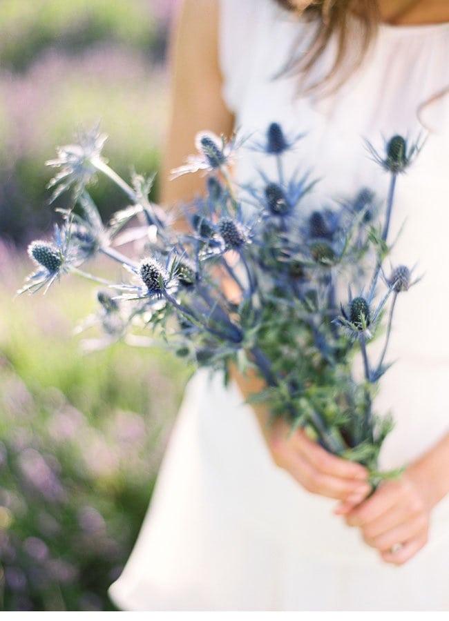 lavendershoot2a