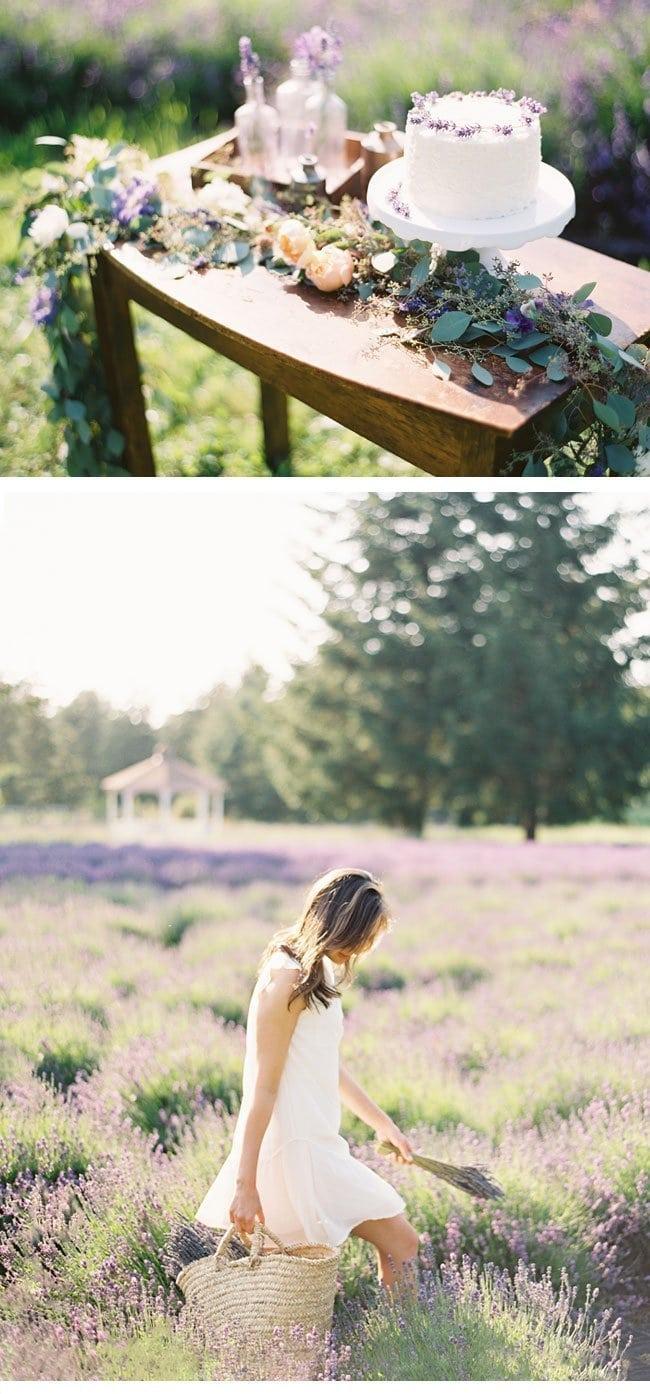 lavendershoot7