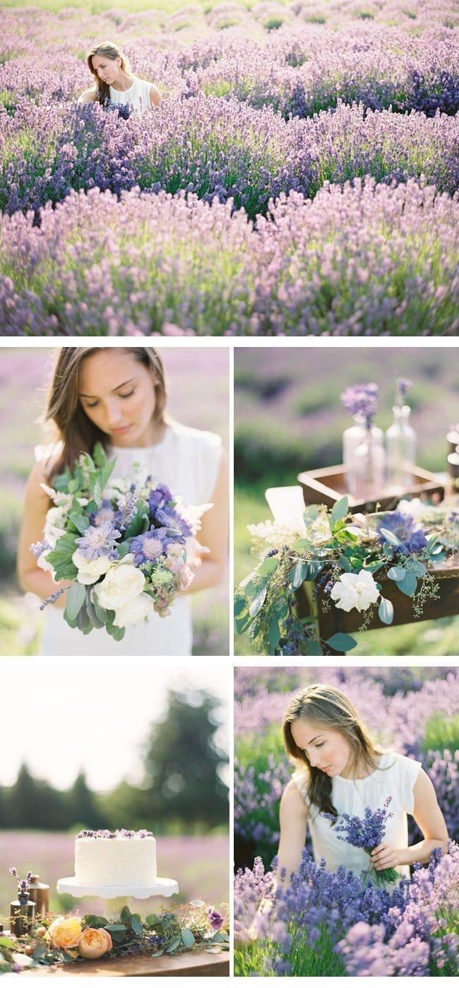 lavendershoot9