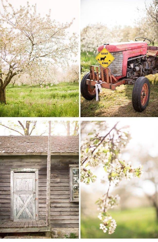 orchardwedding0a-hochzeit im fruehling