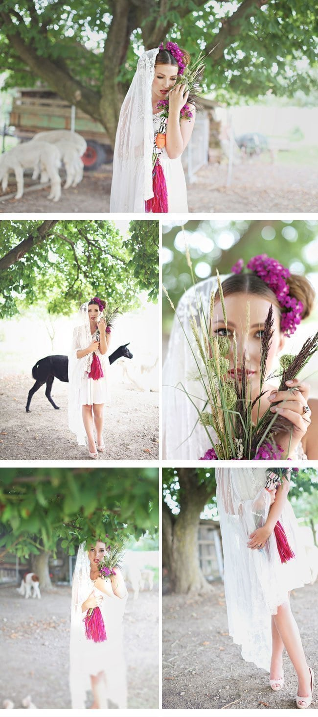 alpaca4-styled shoot