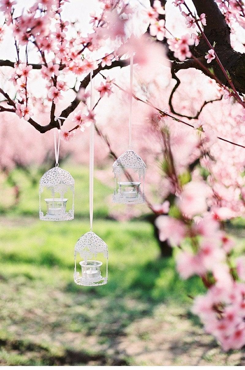 blooming peach tree shoot 0004