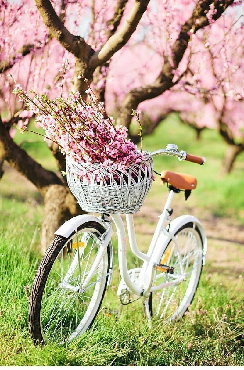 blooming peach tree shoot 0010