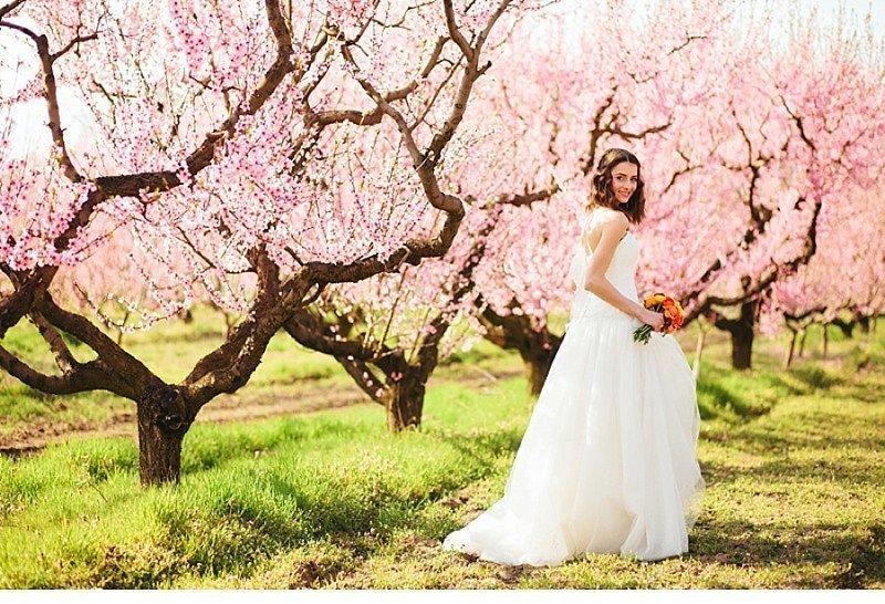 blooming peach tree shoot 0035