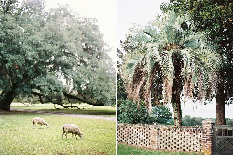 middleton place charleston wedding inspiration 0007a