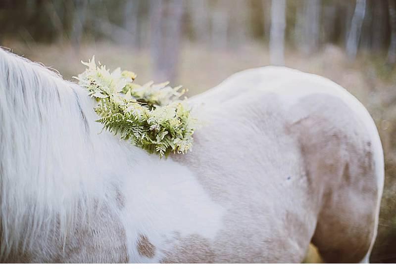 brautshooting mit pferd 0003