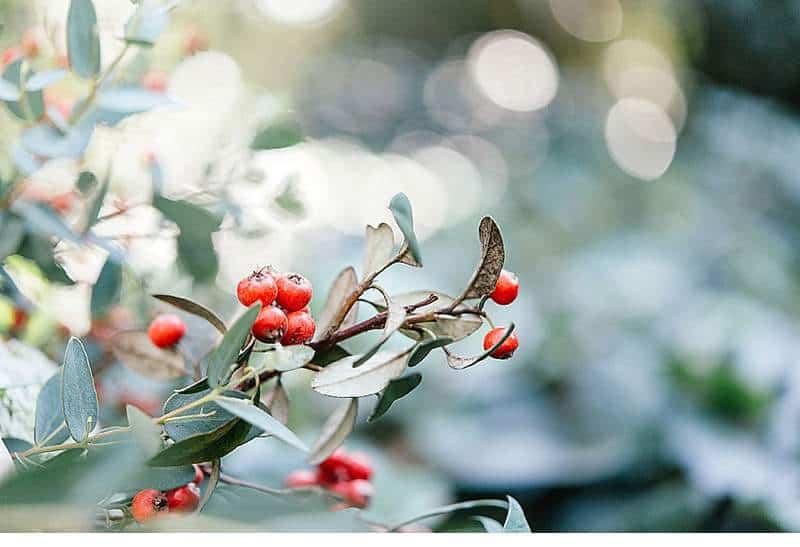 natural-autumn-bridal-shooting_0008