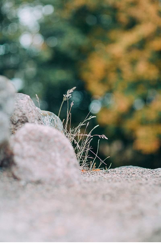 brautshooting-finnland-ruine-wald-schleier-romantisch_0003