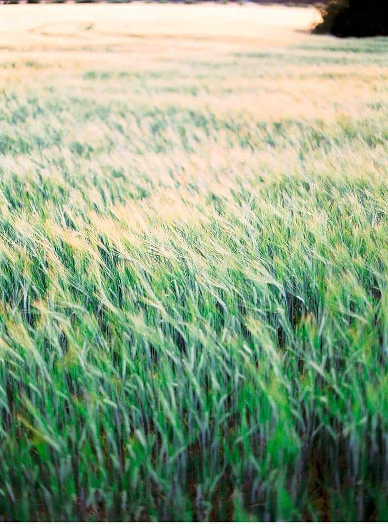 wheat-field-bridal-inspirations_0008