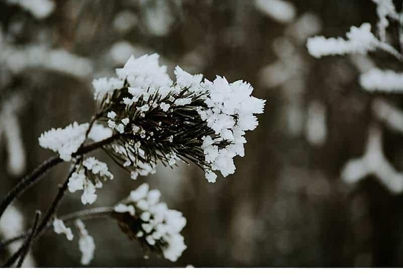 melanie-nebojsa-paarshooting-bergsee-kaernten_0027a