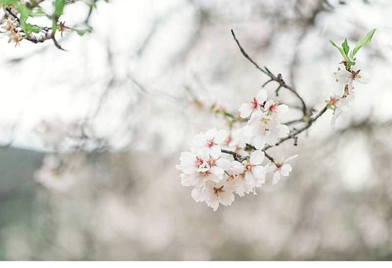 almond-blossom-bride-ibiza_0012