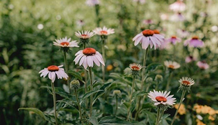 Brautpoesie im Garten von Diana Frohmüller Photography